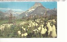 Bear Grass (Xerophyllum Tenax)   Mt Wilber background   Montana   Postcard 81116