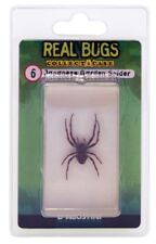 DeAgostini REAL BUGS: Japanese Garden Spider Bug Free Shipping In Lucite