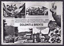 TRENTO MADONNA DI CAMPIGLIO 58 VEDUTINE STAMBECCO Cartolina FOTOGRAFICA