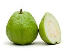 White Flesh Guava / Psidium guajava, Diabetic Controlling Fruit 25 seeds pack