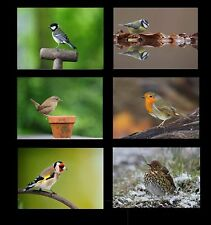 Garden Birds Design Tablemats Placemats  Ideal Gift for any lover of wild birds