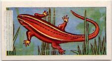 Salamander Amphibian Vintage Trade Ad Card