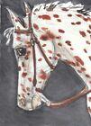 ACEO original Watercolor Art Card Horse bay Leopard Appaloosa Western bridled
