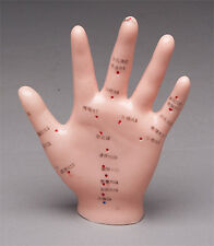Hand Acupuncture Anatomical Model New