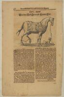 ARABER Pferd + HUND Holzstich auf Orig. Textblatt um 1690 Pferdezucht Dressur