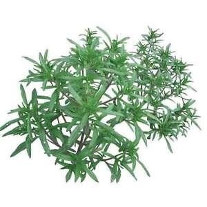 huile essentielle Sarriette des montagnes BIO 10 ml - Top qualité la vie en zen