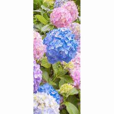 Textilposter - Hortensien Blumen Poster aus Stoff ca 90 x 180 cm