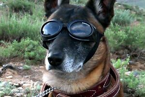 Doggles ORIGINALZ Dog Goggles Sunglasses Eye Protection BLACK Medium