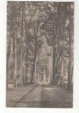 Finches Avenue Rickmansworth Hertfordshire 1905 Postcard 066c
