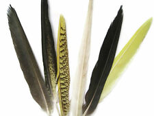 Cockatiel Feathers Tail Feathers - 4 Pieces, Yellow & Black Barred Rare Molted