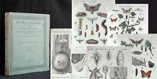 RATZEBURG Die Forst-Insekten 2. Teil: FALTER 1840 Schmetterlinge Entomologie