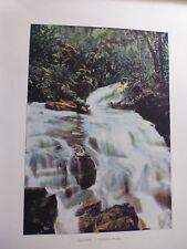 Tahiti/Moréa:Gravure 19°in folio couleur/ Cascade a Mooréa