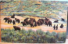 Postcard GRIZZLY BEAR FEEDING GROUNDS Canyon Yellowstone Natl Park Linen 1942