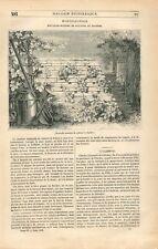 Fraisier Fraises Trapèze Horticulture de Paris GRAVURE ANTIQUE OLD PRINT 1836