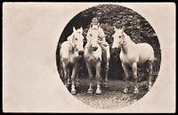 WAR HORSES CAVALRY BEAUTIES HORSEMAN WW1 RPPC PHOTO POSTCARD