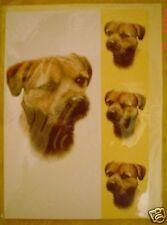 Lovely Border Terrier Blank Greeting Card