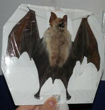 SPREAD WINGS HIPPOSIDEROS DIADEMA REAL BAT INDONESIAN TAXIDERMY DIADEM