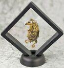 W100f Taxidermy Preserved Quail Chick display specimen bird oddities Curiosities