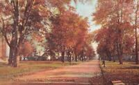 Chatham Ontario~Victoria Avenue Homes~Autumn Trees~1910 Postcard
