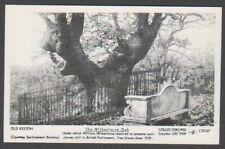 London postcard - Old Keston, The Wilberforce Oak - RP (A1691)