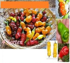 40x divertente Chili Rosso Verde Giallo Arancione SEMI SEMENTI PIANTA pene chili #19/1