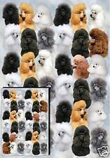 Poodle Gift Wrapping Paper By Starprint