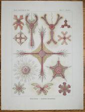 ERNST HAECKEL: Kunstformen Discoidea Starfish (No. 11) 1st. Edition - 1900