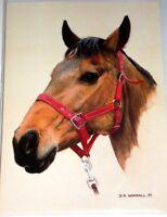 HORSE FINE ART CARDS x12 JUST 25p,,by David Worrell. SUPERB ILLUSTRATION ( B134