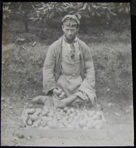 Glass Magic Lantern Slide FARM HAND WITH GATHERED APPLES DATED AUGUST 1893 PHOTO