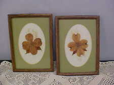 Wall Art Pressed Dogwood Flowers Sealed With Parchment Artist Barbara Hackett