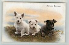 HIGHLAND TERRIERS - SALMON  POSTCARD
