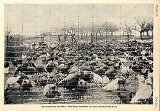 Nel paese d'origine di puter: una mandria puter su una fattoria americana c.1905