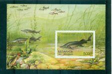 PESCI D'ACQUA DOLCE - FRESH WATER FISH BELARUS 1997 block