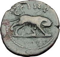 COMMODUS 188AD Parium Parion Mysia Authentic Ancient Roman Coin WOLF i65162