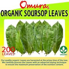 Omura Organic SOURSOP GRAVIOLA GUANABANA Leaves (Pack 200+ LEAVES)