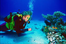 787091 Diver Studying Coral Reef A4 Photo Print