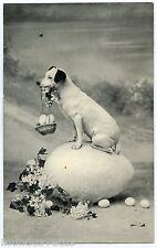 JOLI PETIT CHIEN SAVANT. BEAUTIFUL LITTLE SCIENTIST DOG. PAQUES. EASTER. OEUFS