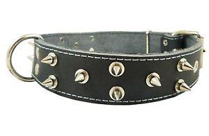 "Thick Genuine Leather Dog Collar Spikes 22""-26"" neck Mastiff Cane Corso"
