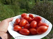 graines semences Tomate  ROMA Tomaten qualité Tomato Seeds    livraison gratuite