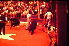 #10 35mm slide - Vintage - Collectibles - Photo - circus bears pose people
