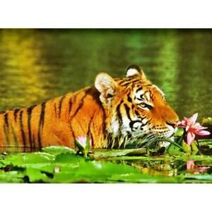 Puzzle Ravensburger 500 details Tiger in Lilies Germany