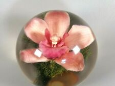 More details for rare hafod grange pink orchid acrylic encased paperweight collectible flower