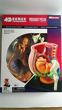1 Set 4D Human Pregnancy Pelvis Anatomy Model-Fetus, umbilical Cord, Uterus