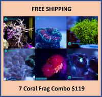 Live 7 Coral Frag Starter Pack FREE Shipping (Saltwater)