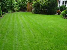 1 kg Schattenrasen Rasensamen Rasensaat Grassamen Rasen Profiqualität hochwertig