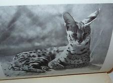 Saggio Etologia Natura, Rossi: Tra animali selvatici in prigionia 1933 Mondadori