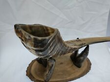 More details for shofar, polished african ram horn, kosher, small 32cm/12.5