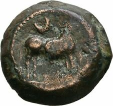 SPAIN HISPANIA CASTULO HEAD BULL BRONZE SEMIS IBERIA CELTIC GREEK TEK 1204, ss