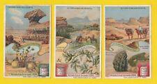 LIEBIG - SET OF 6 CARDS -  S 922  /  F 921  -  DESERTS  &  THEIR  FLORA  -  1908