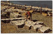 Drying Salt Fish on Flakes NOVA SCOTIA Canada Book Room H.S. Crocker Postcard